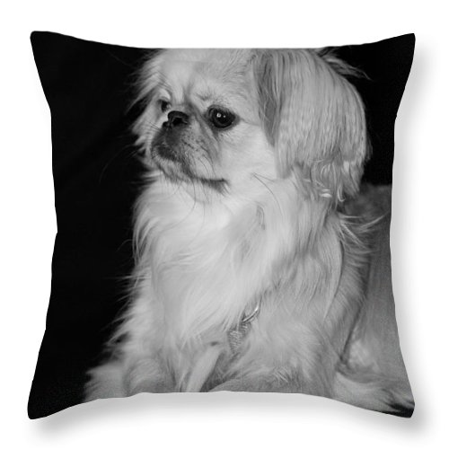 Animal Throw Pillow featuring the photograph The Princess by Kristi Swift