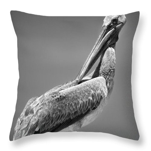 The Proper Pelican Throw Pillow featuring the photograph The Proper Pelican by Michelle Constantine