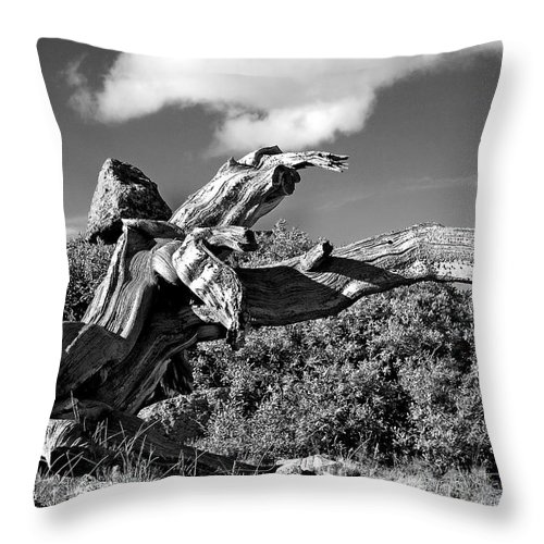 Bristlecone Pine Photograph Throw Pillow featuring the photograph The Prophet by Jim Garrison