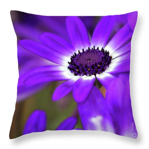 Flower Throw Pillow featuring the photograph The Purple Daisy by Sabrina L Ryan