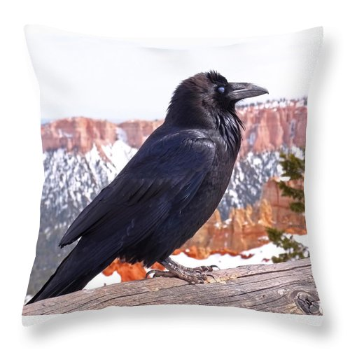 Raven Throw Pillow featuring the photograph The Raven by Rona Black