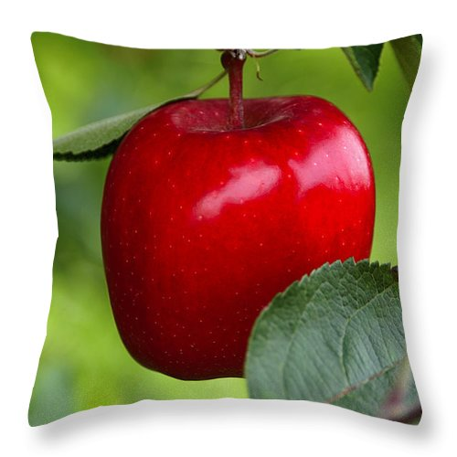 Apple Throw Pillow featuring the photograph The Red Apple by Anthony Sacco