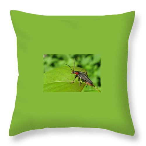 Garden Throw Pillow featuring the photograph The Rednecked Bug- Close Up by Ausra Huntington nee Paulauskaite