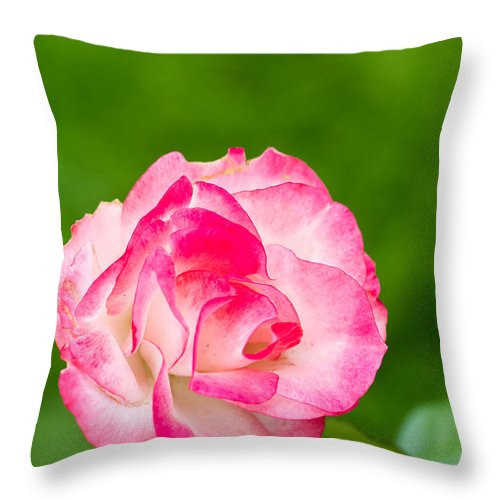 Rose Art Throw Pillow featuring the photograph The Secret Is... by Ronald Hunt