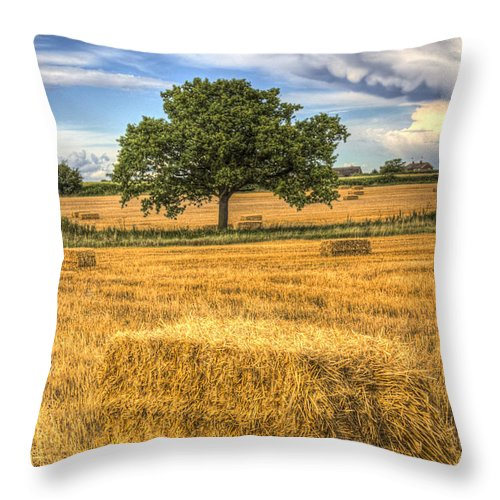 Farm Throw Pillow featuring the photograph The Solitary Farm Tree by David Pyatt