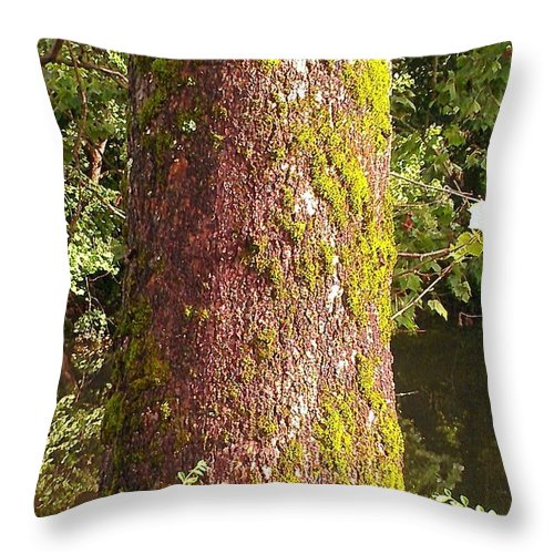 Tree Throw Pillow featuring the photograph The South Side by Lew Davis