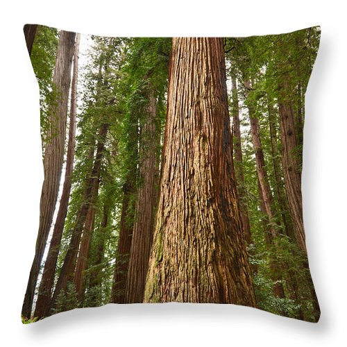 Redwoods Throw Pillow featuring the photograph The Survivor - Massive Redwoods Sequoia Sempervirens In Redwoods National Park Named Stout Tree. by Jamie Pham
