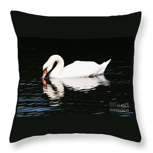 Swan Photography Reflection Photography Surreal Photography Animal Portrait Photography Stock Shot Photography Bird Photography Nature Photography Greeting Card Metal Frame Suggested Poster Print Available On T Shirts Tote Bags Shower Curtains And Phone Cases Throw Pillow featuring the photograph The Swan by Marcus Dagan