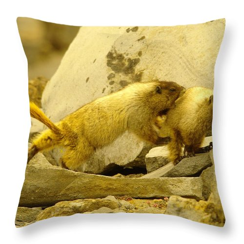 Marmots Throw Pillow featuring the photograph The Tackle by Jeff Swan