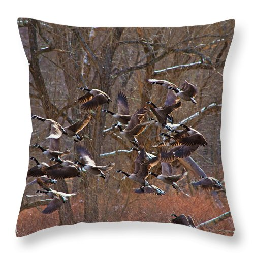 Geese Throw Pillow featuring the photograph The Take Off by Bill Kolodzieski