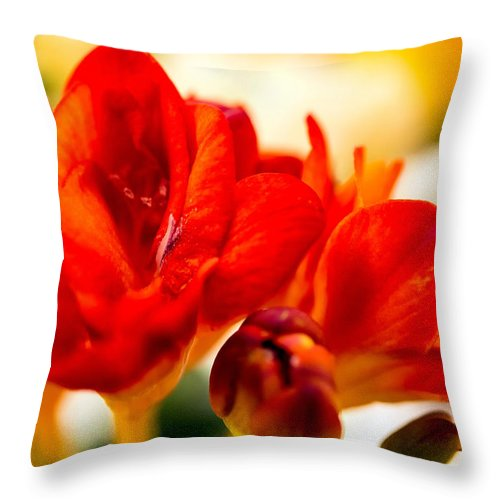 Freesia Throw Pillow featuring the photograph The Touch Of Red by Tomasz Dziubinski