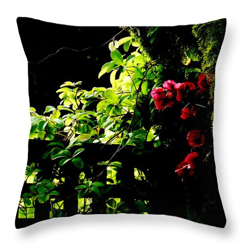 Backlit Throw Pillow featuring the photograph The Trellis by Steve Taylor