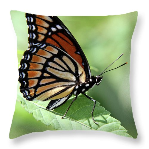 Viceroy Butterfly Throw Pillow featuring the photograph The Viceroy by Doris Potter