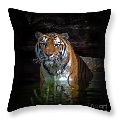 Tiger Throw Pillow featuring the photograph The Watering Hole by Bianca Nadeau