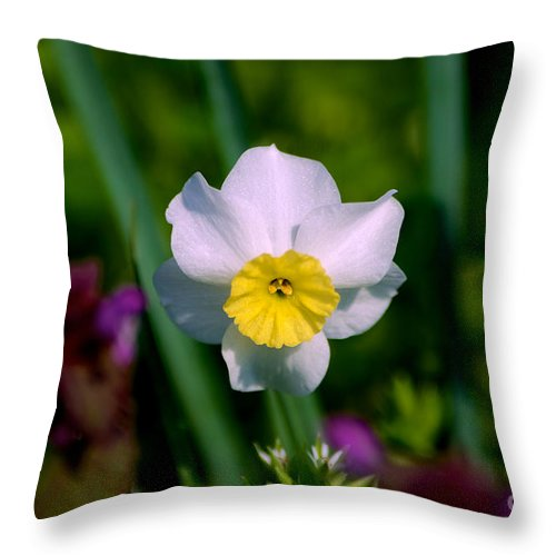 Close Up Throw Pillow featuring the photograph The White And Yellow Daffodil by Mark Dodd