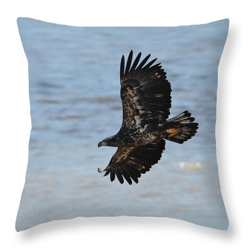 Bald Eagle Throw Pillow featuring the photograph The Wind Beneath My Wings by Regine Brindle