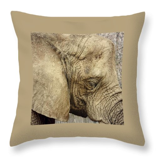 Elephant Throw Pillow featuring the photograph The Wise Old Elephant by Nikki Watson  McInnes