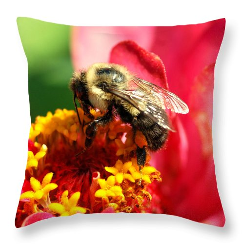 Zinnia Throw Pillow featuring the photograph The Zinnia And The Bee by Optical Playground By MP Ray