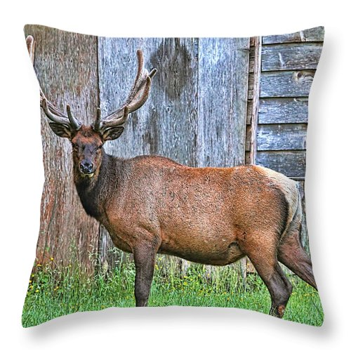 Elk Throw Pillow featuring the photograph There's An Elk By The Barn by Peggy Collins