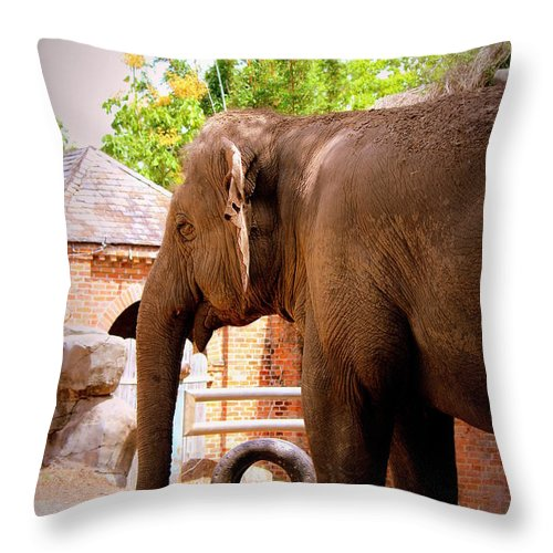 They All Ask'd For You Throw Pillow featuring the photograph They All Ask'd For You by Beth Vincent