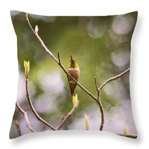 Hummingbirds Throw Pillow featuring the photograph Things Are Looking Up by Peggy Collins