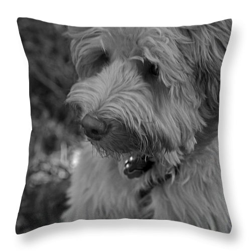 Domestic Throw Pillow featuring the photograph Thinking by Sandra Clark