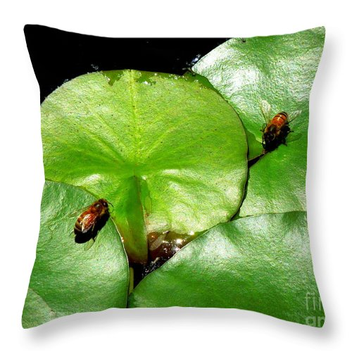 Funky Throw Pillow featuring the photograph Thirsty Honey Bees by Renee Trenholm