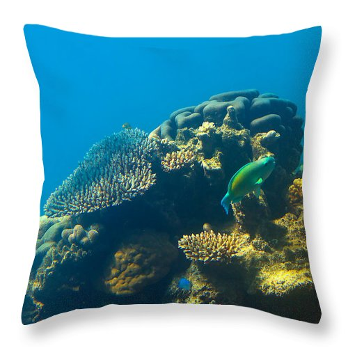 Barrier Reef Canvas Print Throw Pillow featuring the photograph This Is Why They Call It The Great Barrier Reef by Mr Bennett Kent