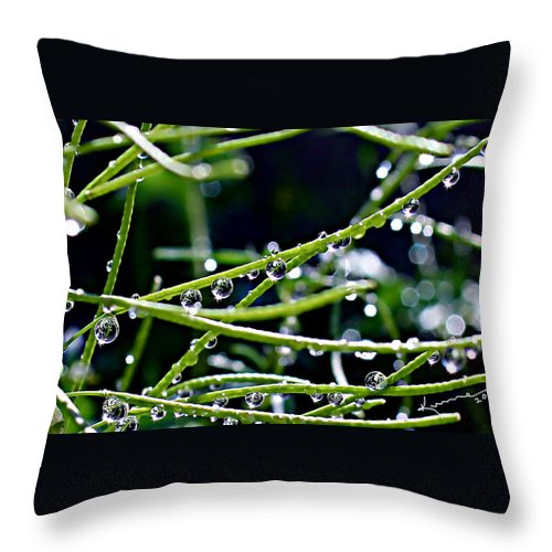 Morning Throw Pillow featuring the photograph This Morning by Kume Bryant