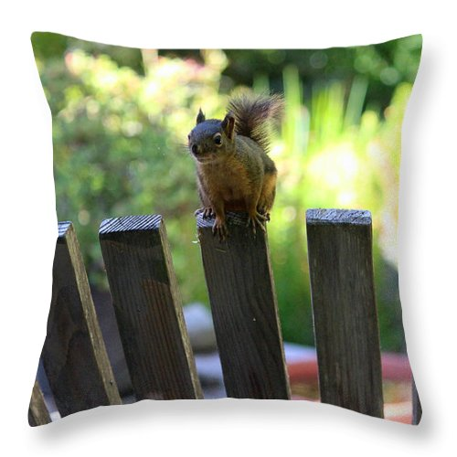 Mammals Throw Pillow featuring the photograph This Seat Is Taken by Kym Backland