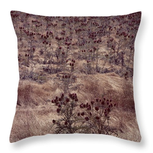 Thistle Throw Pillow featuring the photograph Thistle Field by David Hohmann