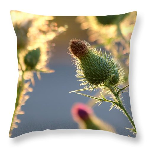 Thistle Throw Pillow featuring the photograph Thistle Garden by Kenny Glotfelty