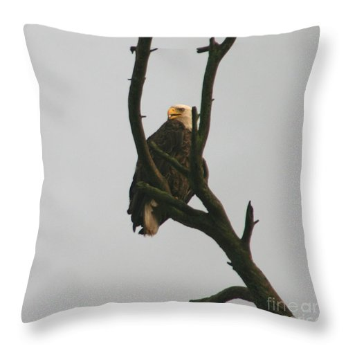 Eagle On Tree Throw Pillow featuring the photograph Threatened by Neal Eslinger