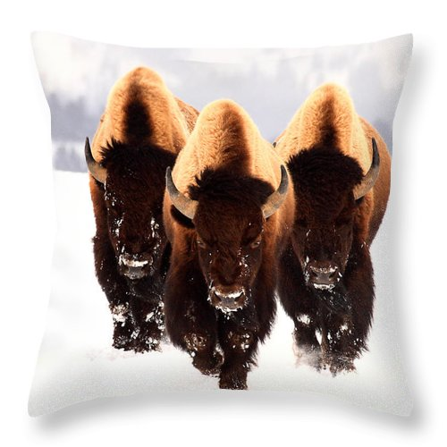 Yellowstone Throw Pillow featuring the photograph Three Amigos by Steve Hinch