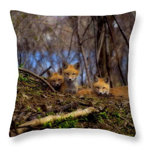 Red Foxes Throw Pillow featuring the photograph Three Cute Kit Foxes At Attention by Thomas Young