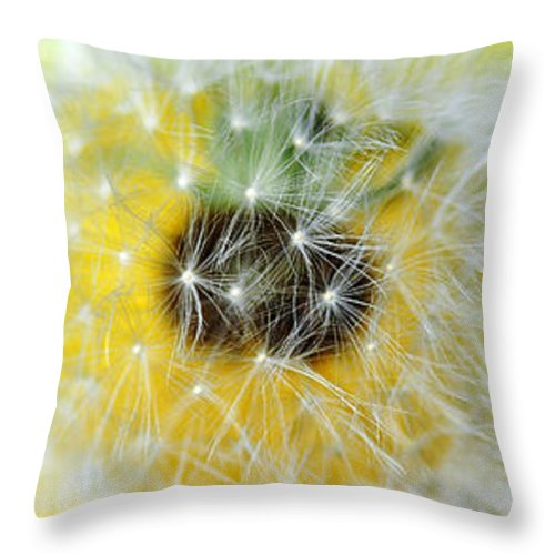 Photography Throw Pillow featuring the photograph Three Dandelions In A Line by Kaye Menner