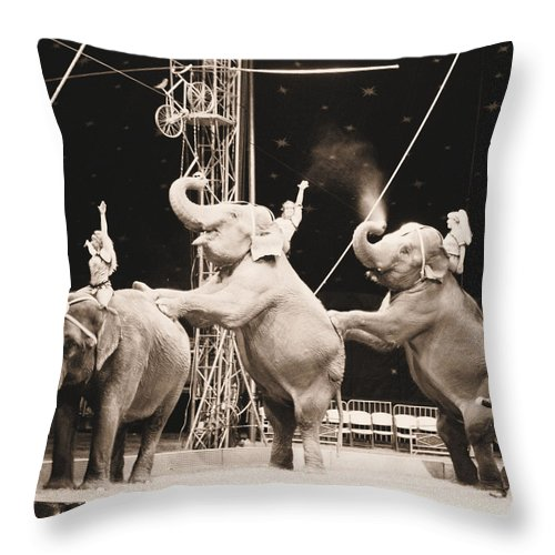 Elephants Throw Pillow featuring the photograph Three Elephant Circus Performance by Sally Bauer