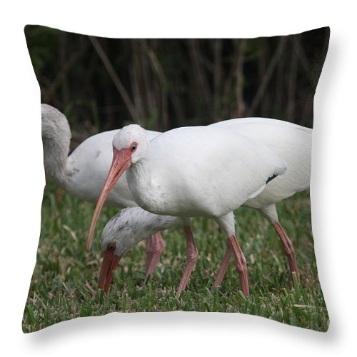 Ibis Throw Pillow featuring the photograph Three Ibis Together by Christiane Schulze Art And Photography