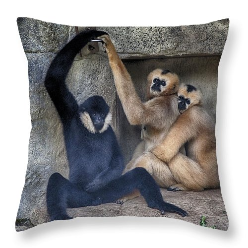 Monkeys Throw Pillow featuring the photograph Three Is A Crowd by Douglas Barnard
