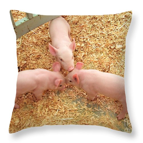 Pigs Throw Pillow featuring the photograph Three Little Pigs by Jennie Breeze