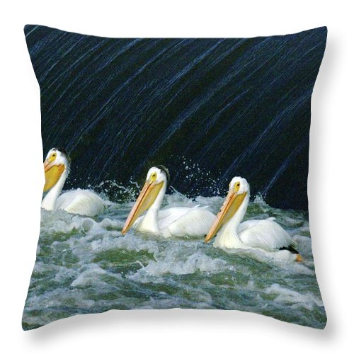 Pelicans Throw Pillow featuring the photograph Three Pelicans Hanging Out by Jeff Swan