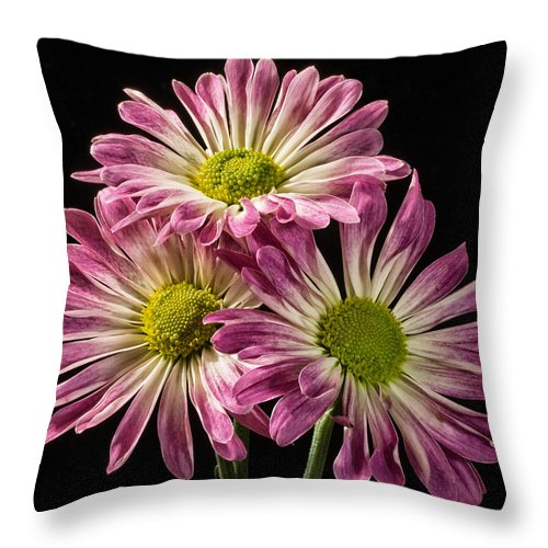 Flowers Throw Pillow featuring the photograph Three Pink Flowers by Martin Belan