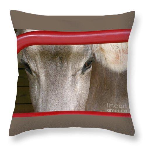 Cow Throw Pillow featuring the photograph Through The Gate by Ann Horn