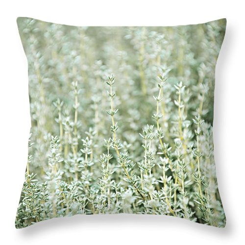 Thyme Throw Pillow featuring the photograph Thyme by Elena Elisseeva