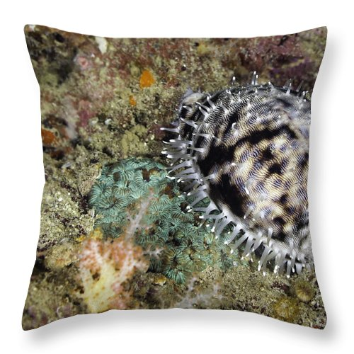 Live Throw Pillow featuring the photograph Tiger Cowrie Snail by Anthony Totah