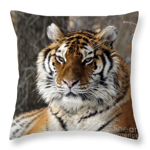 Tinas Captured Moments Throw Pillow featuring the photograph Tiger Head by Tina Hailey