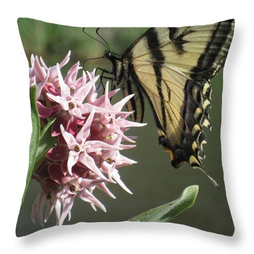 Tiger Swallowtail Throw Pillow featuring the photograph tiger on the Rio Grande by Ron Monsour