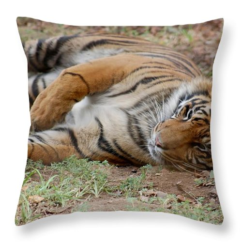 Tiger Resting Throw Pillow featuring the photograph Tiger Resting by Susan Garren