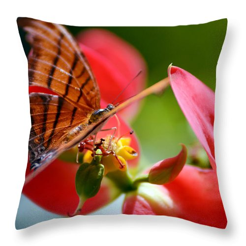 Butterfly Throw Pillow featuring the photograph Tiger Stripped Butterfly by Vanessa Valdes