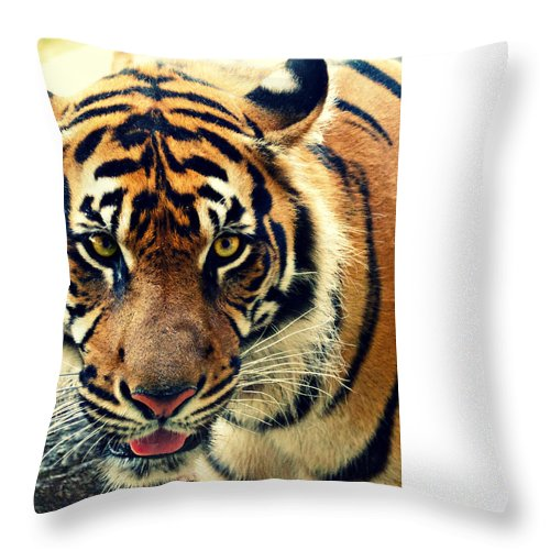Tiger Throw Pillow featuring the photograph Tiger Tongue Two by Alice Gipson